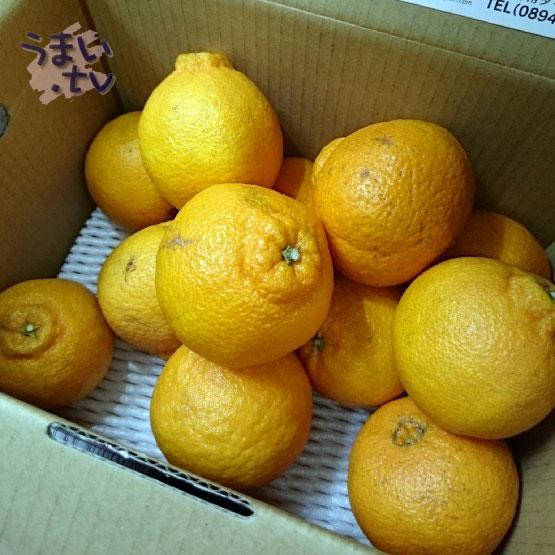 愛媛産デコポン 「デコ姫」2kg 税込み送料込み1,000円