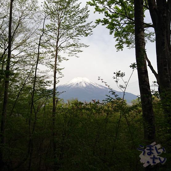 山中湖 オステリア イゾラーナ
